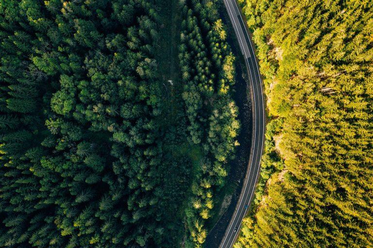 Plantar árboles con drones: la mejor opción para reforestar el mundo