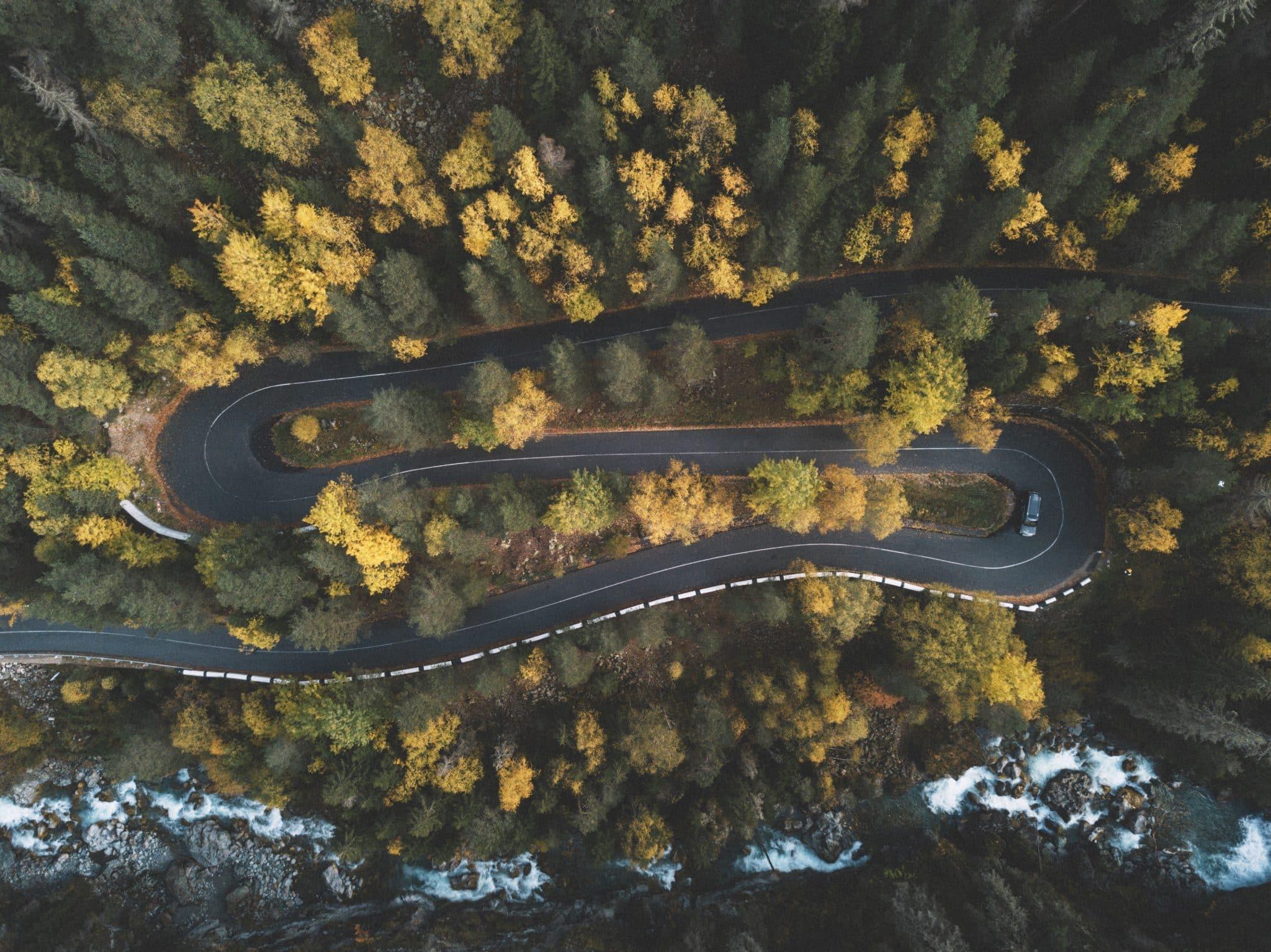 abetos-arboles-autopista-bosque