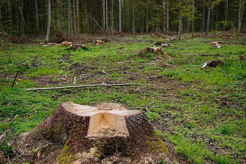 tala-bosques-drones-uso-forestal